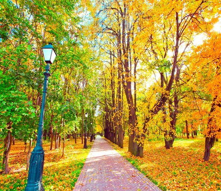 beautiful colorful autumn park in sunny day photo