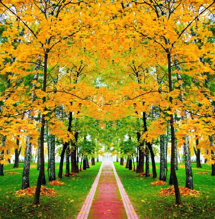 fall scenery: beautiful autumn park