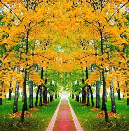 feuille arbre: belle automne parc