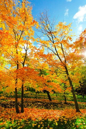 beautiful autumn park photo