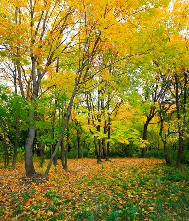 beautiful autumn park photo
