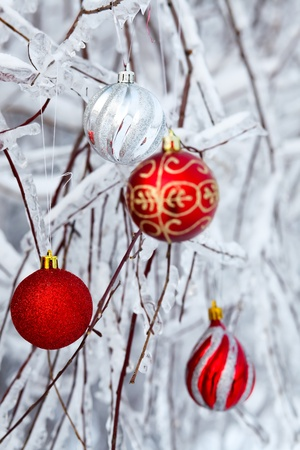 Beautiful Christmas red balls over snowy branches photo