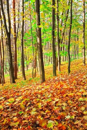 hillock: beautiful autumn hillock