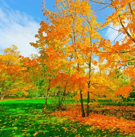 beautiful autumn park Stock Photo - 17685874