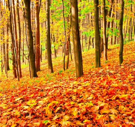 colourful forest Stock Photo - 17685971
