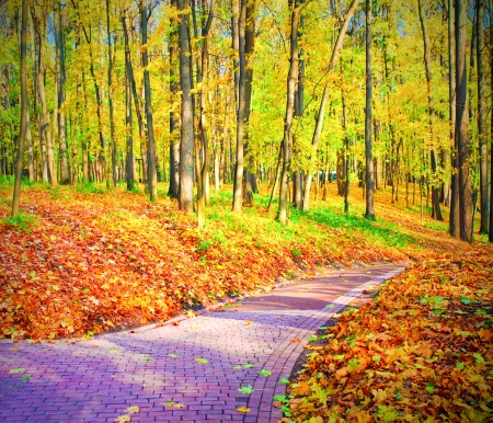 beechwood: beautiful colorful autumn park in sunny day Stock Photo