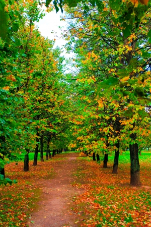beechwood: beautiful colorful autumn park in sunny day, perspective vanishing alley