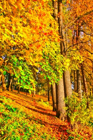 beechwood: Beautiful colorful autumn park in sunny day, perspective vanishing alley Stock Photo