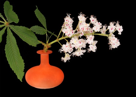 Horse chestnut flower in a vase on a black background photo