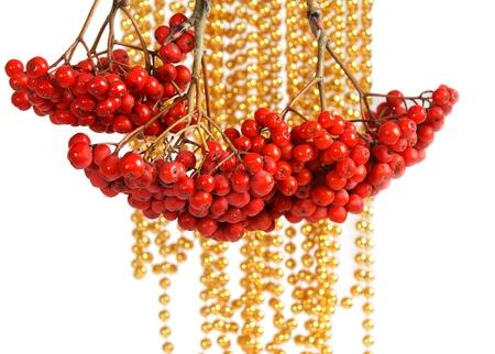 bunchy: Natural red rowan Stock Photo