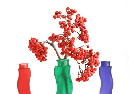 bunchy: Naturaleza muerta con serbal natural rojo sobre un fondo blanco Foto de archivo