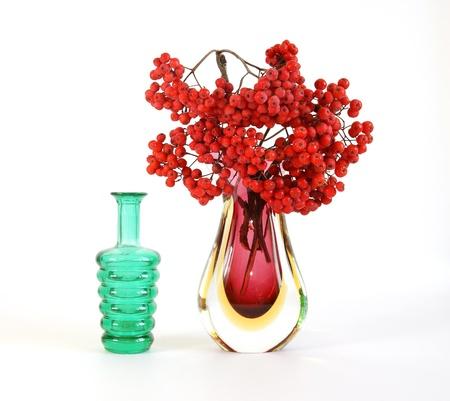 bunchy: Naturaleza muerta con rojo natural serbal sobre un fondo blanco