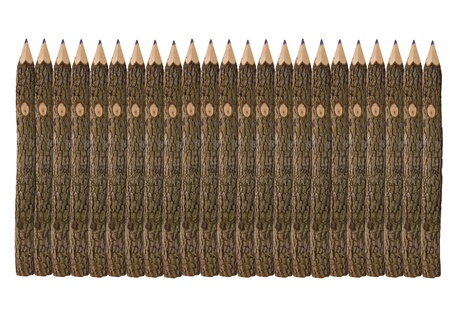 number of unusual pencils of the branches of a tree isolated on white background photo
