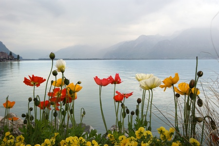 Tulips and poppies on a background of sky, lake and mountains. Switzerland, Montreux, Lake Geneva, Alps photo