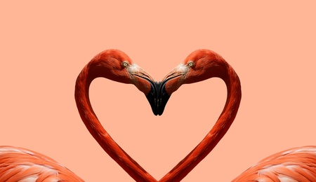 Postcard Valentines Day with pink flamingos on the background of the heart photo
