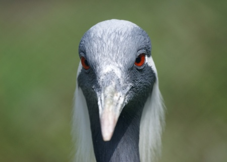 The large image of a stork with a long beak photo