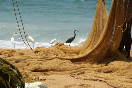fishing net on the ocean. Kovalam, Kerala, South India Stock Photo - 11390881