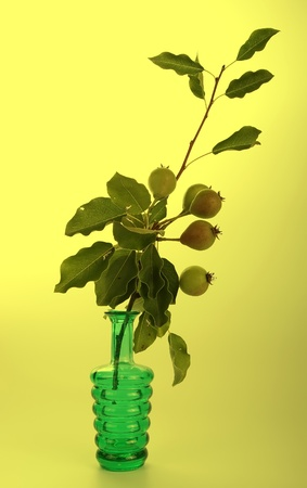 The branch with fresh pears in a glass vase on a yellow background photo