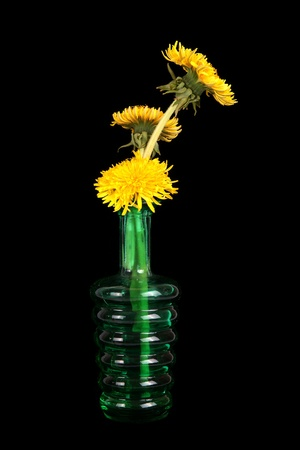 dandelion flowers in a vase on a black background photo