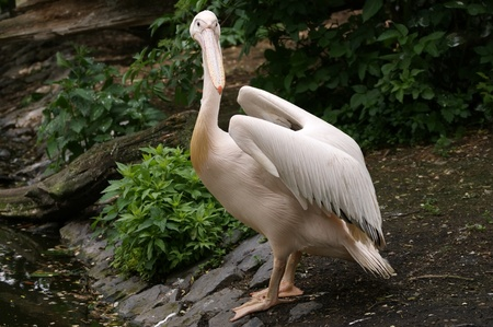 superficial: Pelicans %uFFFD inhabitants of sea shoal, superficial fresh and salty lakes.