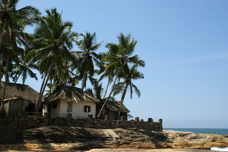 Coconut palms on the ocean shore photo