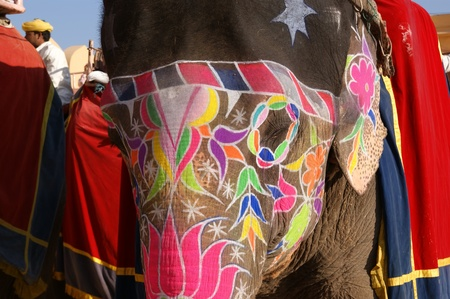 Elephant. India, Jaipur, also popularly known as the Pink City, is the capital of the Indian state of Rajasthan.