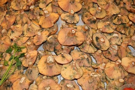 boqueria: Wild mushrooms at Boqueria market, Barcelona, Spain
