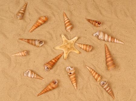 Large starfish and seashells on the sand, Studio shot photo