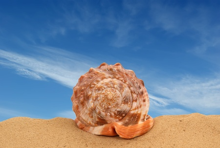 Large seashell on the sand, Studio shot Stock Photo - 13190487