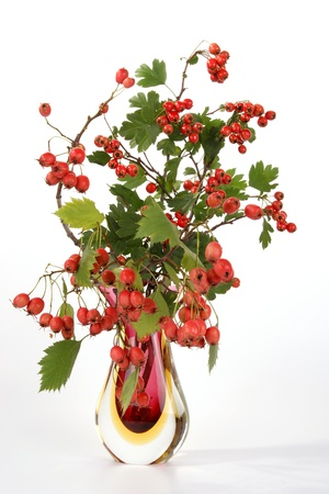 Autumn bouquet with berries of hawthorn in a glass vase on a white background