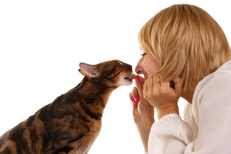 prionailurus: The leopard cat (Prionailurus bengalensis) and girl on a white background Stock Photo