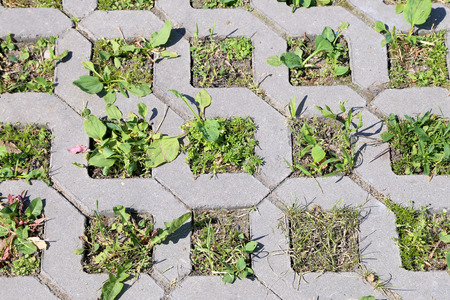 Young green grass grows from the concrete structure photo