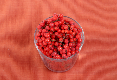 Still-life with fresh natural red rowan berries Stock Photo