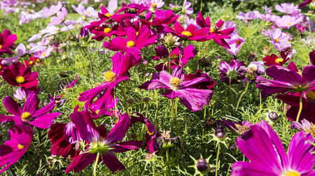 Close up flowers on a sunny summer day, Natural background
