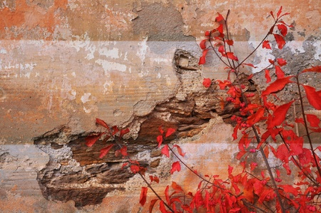 chipped: red leaves on old chipped wall