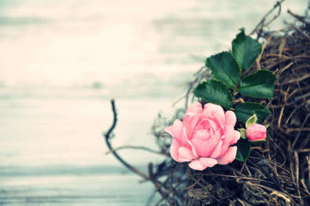 basis: pink rose in the nest on white wood basis