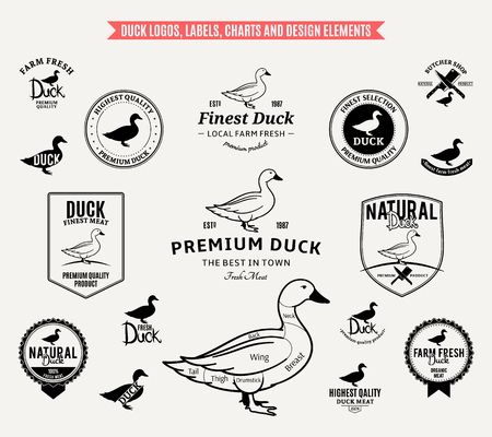 Lots of vector duck design elements. Stock fotó - 95741897