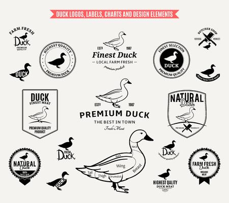 Lots of vector duck design elements.