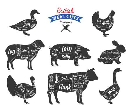 Diagramas británicos de carne de res, cerdo, cordero, conejo, pollo, pato, ganso y pavo