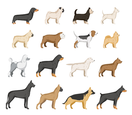 Vector dog breeds collection isolated on white.