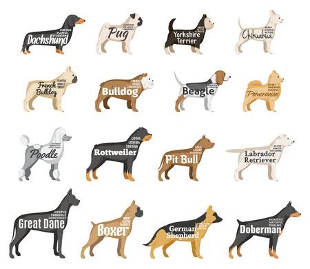 Vector hondenrassen illustratie met namen en persoonlijkheidsbeschrijving op wit wordt geïsoleerd