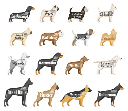Vector dog breeds illustration with names and personality description isolated on white