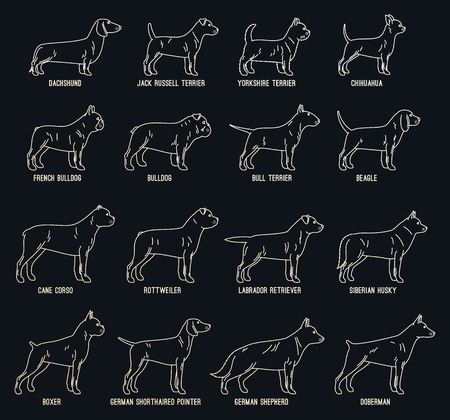 Vector dog thin line icons collection with dog breed names on dark background for dog club or shop, grooming, training, food or veterinary clinic. Illustration