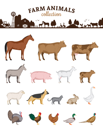 Vector farm animals isolated on white, Livestock and poultry icons set.