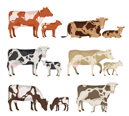 Set of pairs of a cow and calf on a white background