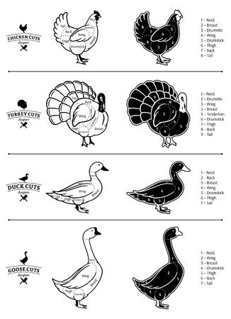 Poultry cuts diagrams. Vektoros illusztráció