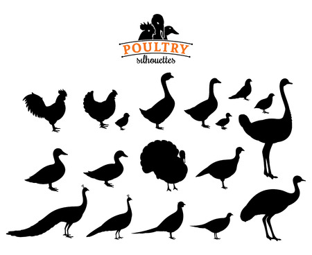 Poultry silhouettes isolated on white. Ilustracja