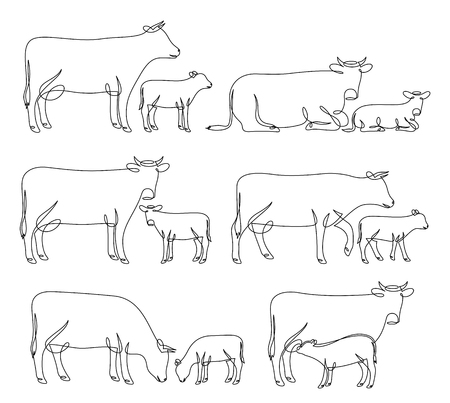 Continuous line drawing of cows and calves in different poses isolated on white for farms, groceries, butchery, dairy products packaging and branding. Ilustração