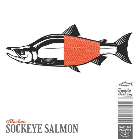 Vector wild Alaskan sockeye salmon fish illustration