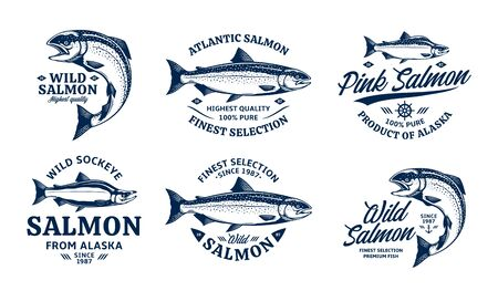 Vector salmon on a white background. Atlantic, chinook, sockeye, and pink salmon illustrations. Seafood labels design Ilustração Vetorial